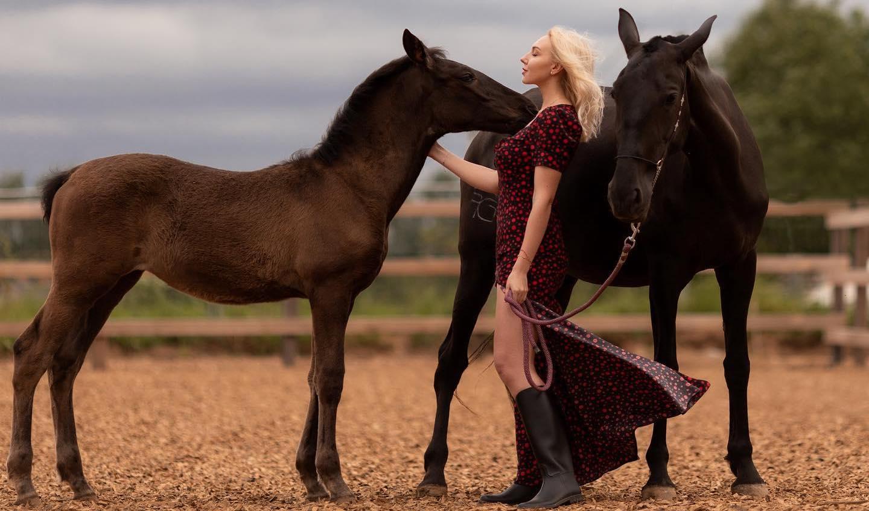 Разведение лошадей Los Establos